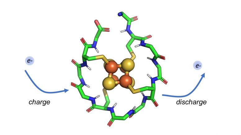科学家发现生活开始时存在的蛋白质