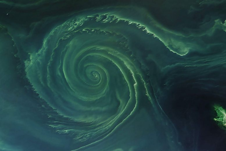 科学家揭示了Phytoplankton如何在营养缺乏海洋旋转中存活