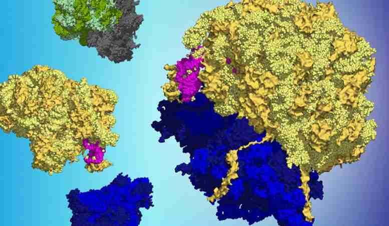科学家发现微小的蛋白质在压力时产生了很大的影响