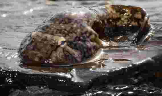 更好的吸盘设计 - 在粗糙的表面上工作 - 受到北藏鱼的启发