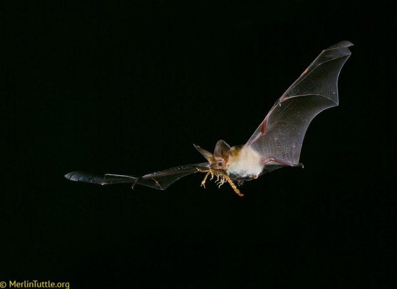蝙蝠使用私人和社交信息捕杀他们的猎物