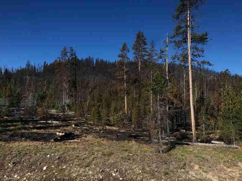 NASA卫星数据显示气候变化对火灾的影响[视频]